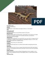 Care Sheet - Giant Desert Hairy Scorpion