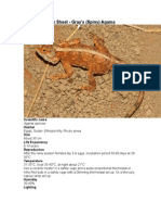 Care Sheet - Gray's (Spiny) Agama
