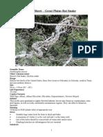 Care Sheet - Great Plains Rat Snake