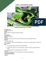 Care Sheet - Green Bush Rat Snake