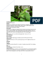 Care Sheet - Green Crested Lizard
