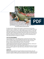 Care Sheet - Green Iguana