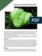 Care Sheet - Green Tree Python