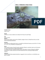 Care Sheet - Halmahera Giant Gecko  (Gehyra marginata)