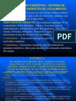 METABOLISMO-ENERGETICO