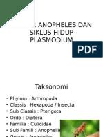 Vektor Anopheles Dan Siklus Hidup Plasmodium
