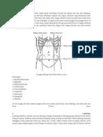 anatomi ABDOMEN.docx