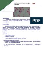 Observação Microscópica de Células Do Sangue Humano