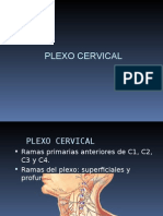 PLEXOCERVICAL.ppt