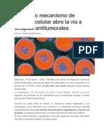 Un Nuevo Mecanismo de División Celular Abre La Vía a Terapias Antitumorales MICROTUBULOS MITOSIS CELULAR