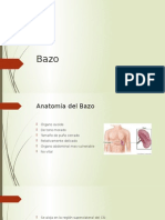 Bazo y Pancreas