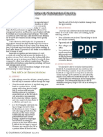 field resuscitation of newborn calves