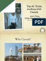 camel talk ucd for webpage