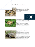 Care Sheet - Mediterranean Tortoise