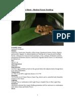 Care Sheet - Modest Forest Treefrog