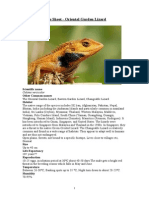 Care Sheet - Oriental Garded Lizard