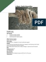 Care Sheet - Pacific Ground Boa