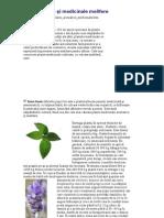 Plante Aromatice Şi Medicinale Melifere