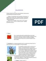 Plante Polinifere