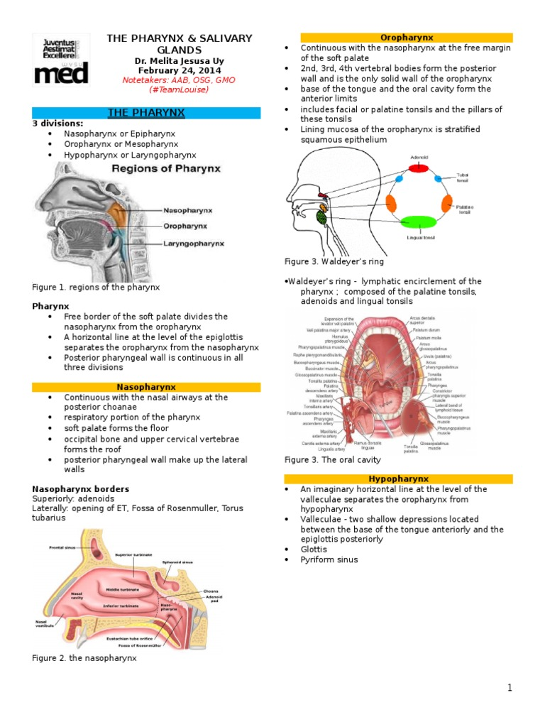 The Pharynx and Salivary Glands | Adenoma | Saliva