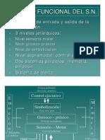 Margulis modelo Funcional y Niveles de Organizacion Sn