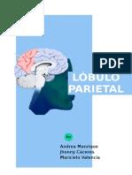 Guia Practica Lóbulo Parietal