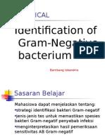 Praktikum Mikrobiologi Gram Negatif