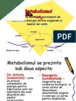 papiloamele cauzează paraziți slimquick curăță supliment dietetic kit de detoxifiere