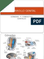 Desarrollo Genital Interno