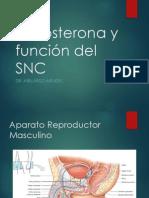 06 - Testosterona y Función Del SNC
