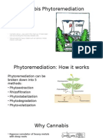 Cannabis Phytoremediation