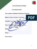 Placenta Cindel Osan i Males Domestic Os