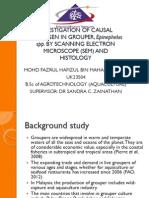 causal pathogen in grouper