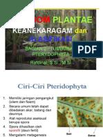 Kingdom Plantae Paku
