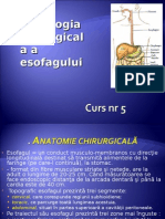 curs 5 esofag.ppt