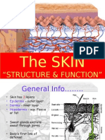 Skin Structure & Function