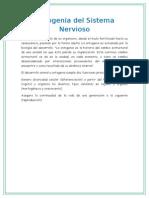Ontogenia Del Sistema Nervioso