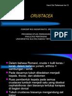Crust Ace A