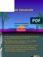 Filum sipuncula