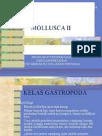 MOLLUSCA II