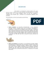 Aplicción Del Hierro en Biología