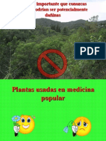 Plant As CURATIVAS