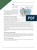 Microcirculación.pdf