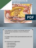 11.- Anatomía de Colon