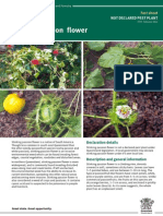 IPA Stinking Passion Flower PP95
