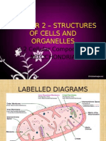 Chapter 2 – Structures of Cells and Organelles