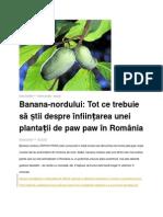 Banana Nordului