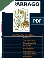 cultivo de esparragos
