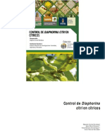 poblaciones de diaphorina norte de sinaloa