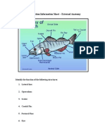 Fish Dissection Information Sheet - External Anatomy